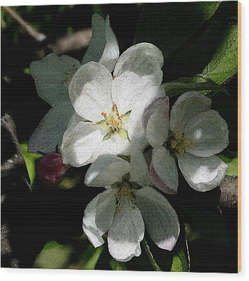 Painted Blossoms Wood Print by Karen Harrison
