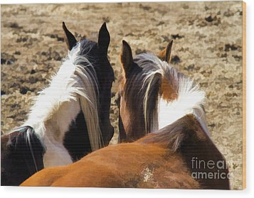 Painted Horses IIi Wood Print by Angelique Olin