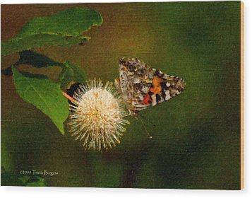 Wood Print featuring the photograph Painted Lady Impasto by Travis Burgess
