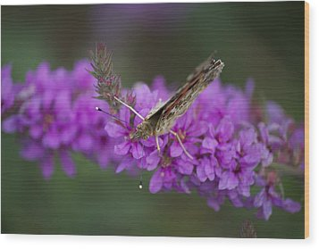 Painted Lady Looking Wood Print