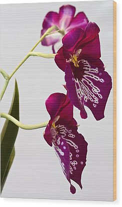 Painted  Orchid L Wood Print by Shirley Mitchell