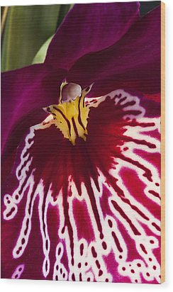 Wood Print featuring the photograph Painted Orchid Ll by Shirley Mitchell