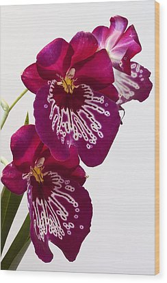 Painted Orchid Wood Print by Shirley Mitchell