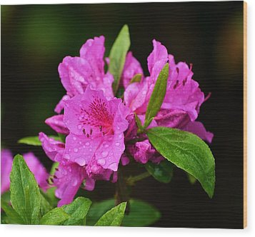Wood Print featuring the photograph Painted Pink by Mary Zeman