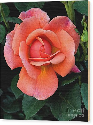 Painted Rose Wood Print by Cindy Manero
