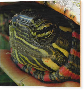 Painted Turtle Wood Print by Griffin Harris