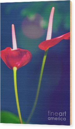 Painter's Palette (anthurium Andraeanum) Wood Print by Maria Mosolova