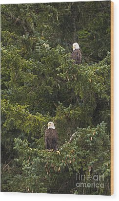Pair Of Bald Eagles Wood Print by Darcy Michaelchuk