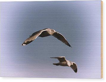Pair Of Gulls Wood Print by Karol Livote