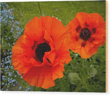 Wood Print featuring the painting Pair Of Poppies by Renate Nadi Wesley