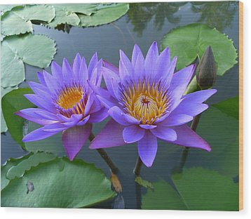 Pair Of Purple Lotuses Wood Print by Gregory Smith