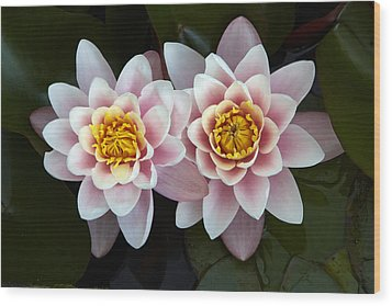 Pair Of Water Lilys Wood Print by Allan Baxter