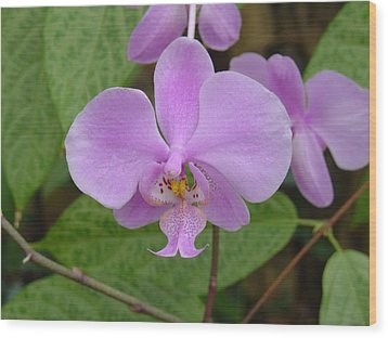 Wood Print featuring the photograph Pale Pink Orchid by Charles and Melisa Morrison