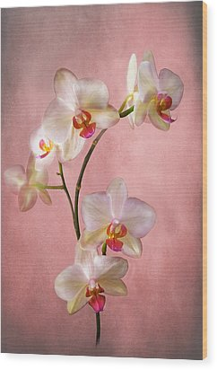 Pale Pink Orchid Spray Wood Print
