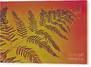 Palm Frond In The Summer Heat Wood Print by Kaye Menner