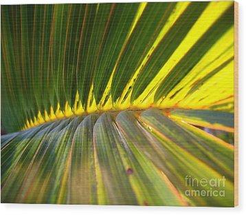 Palm Fronds Illuminated By The Sun Wood Print by Yali Shi