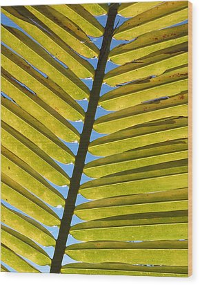 Palm Leaf Wood Print by Chris Andruskiewicz