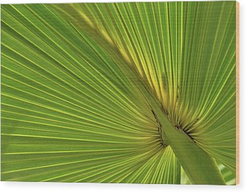 Wood Print featuring the photograph Palm Leaf II by JD Grimes