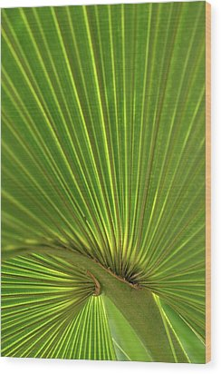Wood Print featuring the photograph Palm Leaf by JD Grimes