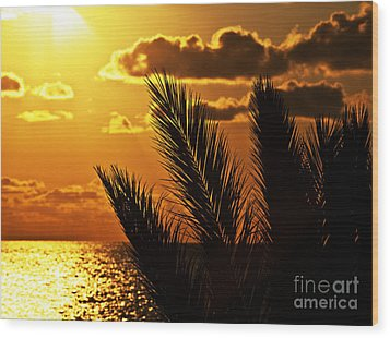 Palm Tree Silhouette At Sunset On The Beach Wood Print by Anna Om