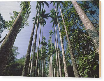 Palm Trees Against The Sky Wood Print by George Oze