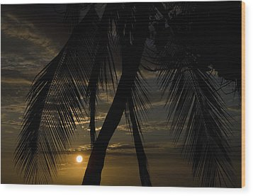 Palm Trees Silhouetted By The Setting Wood Print by Todd Gipstein