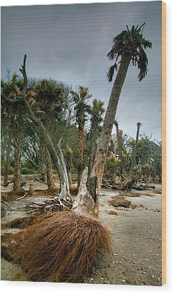 Palm Trees Walking Wood Print by Steven Ainsworth
