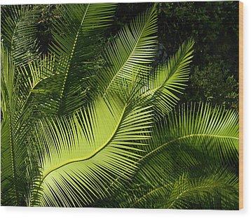 Wood Print featuring the photograph Palms Waving At The Sun by Jodi Terracina