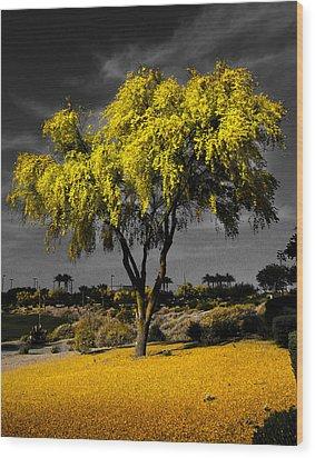 Palo Verde Wood Print by Jim Painter