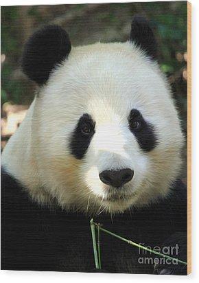 Panda Wood Print by Anne Raczkowski