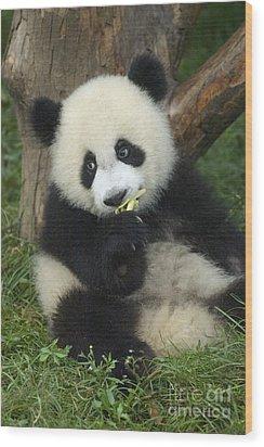 Wood Print featuring the photograph Panda Cuteness by Craig Lovell