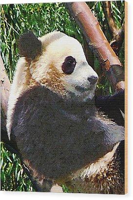 Panda In Tree Wood Print by Susan Savad