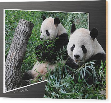 Panda Out Of Frame Wood Print