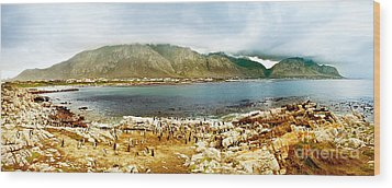 Panoramic Landscape With Penguins Wood Print by Anna Om