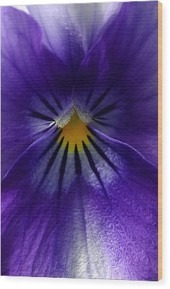 Pansy Abstract Wood Print by Lisa Phillips