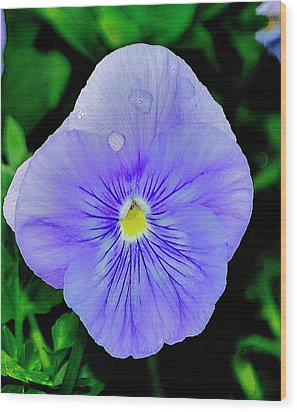 Wood Print featuring the photograph Pansy by Helen Haw