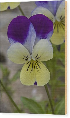 Wood Print featuring the photograph Pansy by Rob Hemphill