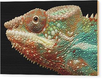 Panther Chameleon Wood Print by MarkBridger