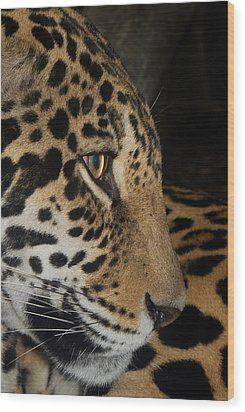 Panthera Onca In Profile Wood Print by Sym