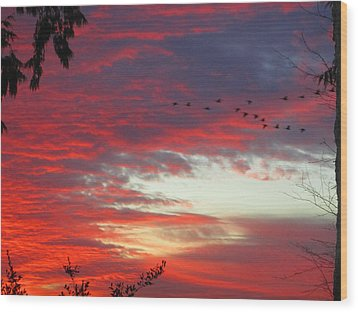 Papaya Colored Sunset With Geese Wood Print by Kym Backland
