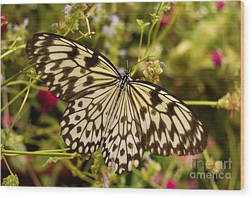 Wood Print featuring the photograph Paper Kite Butterfly by Eva Kaufman