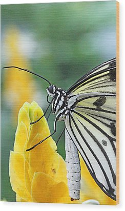 Paper Kite On Yellow Flower Wood Print by Becky Lodes