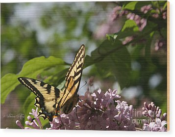 Papilio Glaucus   Eastern Tiger Swallowtail  Wood Print by Sharon Mau