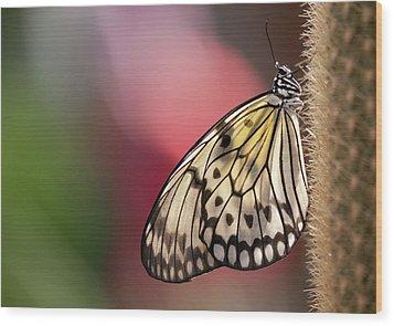 Papillon Wood Print by Pndtphoto