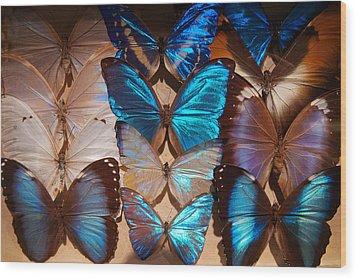 Papillon Wood Print by Tim Nichols