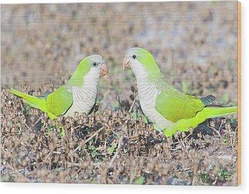 Parakeet Wood Print by Alex Bramwell