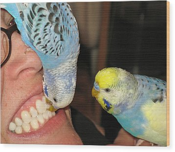 Parakeet Dentists Wood Print