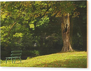 Park Bench Beside The Owenriff River In Wood Print by Trish Punch