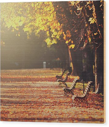 Park Benches In Fall Wood Print by Julia Davila-Lampe