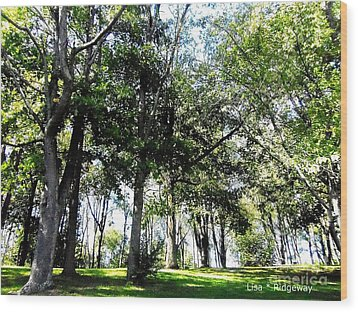 Park Trees Wood Print by Lisa  Ridgeway